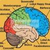 Studiu: Iata ce e in creierul unui roman